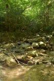 Alpine stream in the forest. In Austria, near Admont stock photo