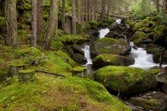 Alpine stream Stock Images