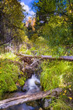 Alpine Stream in New Mexico Royalty Free Stock Photos