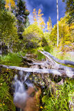 Alpine Stream in New Mexico Royalty Free Stock Photo