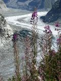 Alpine streams and sea of ice. Alpine streams with in the background the sea of ice, valley of Chamonix Stock Photos