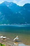 Alpine summer lake view Royalty Free Stock Image