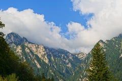 Alpine summer mountain forest. Alpine summer landscape: fir forest,  rocks and clouds Stock Photo