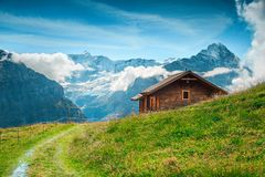 Alpine summer pasture with snowy mountains in background, Grindelwald, Switzerland royalty free stock photography