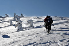 Alpine touring skiers Royalty Free Stock Photos