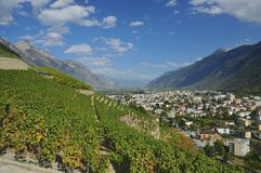 Alpine town and vineyards Royalty Free Stock Images