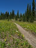 The Alpine Trail. This image of the meadow of wildflowers and the hiking trail was taken in the Jewell Basin hiking area of NW Montana Stock Images