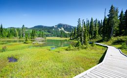 Alpine Trail And Meadow, Strathcona Provincial Park, Vancouver Island, British Columbia, Canada Royalty Free Stock Images