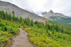 Alpine trail through the Canadian Rockies along the Icefields Parkway between Banff and Jasper Stock Images