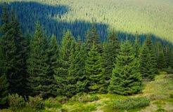 Alpine trees Stock Photo