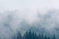 Alpine trees in fog Stock Photos