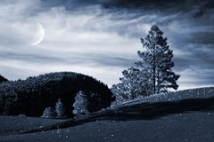 Alpine Trees and Moon Royalty Free Stock Photography
