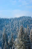 Alpine trees with snow Royalty Free Stock Photo