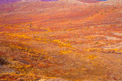 Alpine tundra Royalty Free Stock Photo