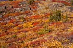 Alpine tundra Royalty Free Stock Photography
