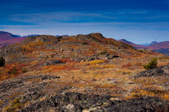 Alpine tundra royalty free stock image