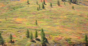 Alpine tundra Royalty Free Stock Photos