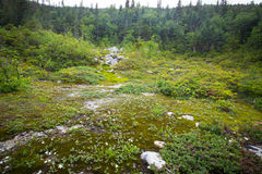 Alpine Tundra Royalty Free Stock Image