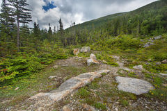 Alpine Tundra. Rugged alpine terrain at top of Mount Washington NH stock images