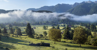 Alpine valley in the morning mist,above Lake Bohinj. Slovenia Stock Images