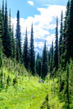 Alpine valley with trees Royalty Free Stock Photos