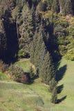 Alpine vegetation Stock Images