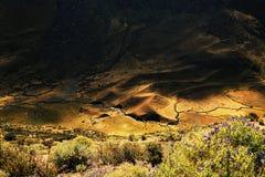 Alpine vegetation in Cordiliera Huayhuash Royalty Free Stock Photography