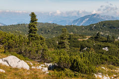 Alpine vegetation in Hoher Dachstein Alps, Austria Stock Photo
