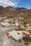 Alpine vegetation at Mount Tongariro Stock Photography