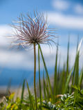 Alpine vegetation Royalty Free Stock Photo