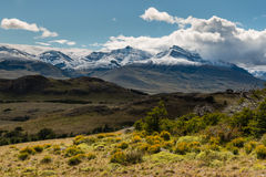 Alpine vegetation in Southern Patagonia Stock Image
