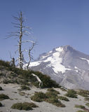 Alpine View of Mt. Hood Stock Images