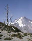 Alpine View of Mt. Hood Stock Images