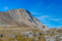 Alpine Views Royalty Free Stock Image