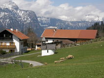 Alpine village in Bavaria. View of a village in Bavarian Alps in April with cottages against woody mountains and cloudy sky, and sheep pasturing on grasslands Stock Photography
