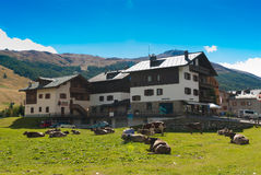 Alpine village in Italy-Livigno Stock Photography