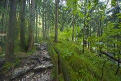 Alpine wandernde Bahn Lizenzfreies Stockbild