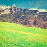 Alpine Weide Stockfoto
