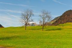 Alpine Weide Lizenzfreie Stockfotos