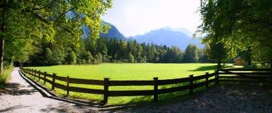 Alpine Wiese, Österreich lizenzfreies stockfoto