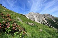 Alpine Wiese Lizenzfreie Stockfotografie