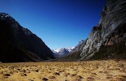 Alpine Wiese Stockbild