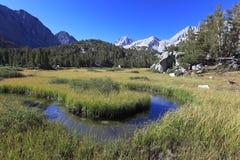 Alpine Wiese in den Kalifornien-Bergen Lizenzfreie Stockfotos