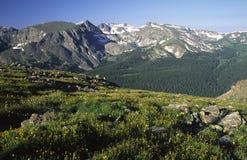 Alpine Wiese an der Hinterridge-Straße in Kolorado Stockfotos