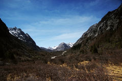 Alpine Wiese mit jokul Stockfotos