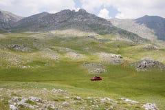 Alpine Wiesen Lizenzfreies Stockbild