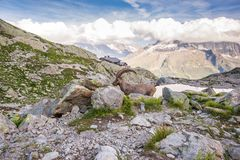 Alpine Wild Ibex Pausing in front of High Altitude Lake and Iconic Mont-Blanc Moutain stock image