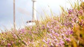 Alpine wilde Blumen stock video