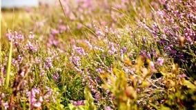 Alpine wilde Blumen stock footage