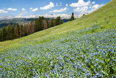 Alpine wildflower landscape Stock Photos